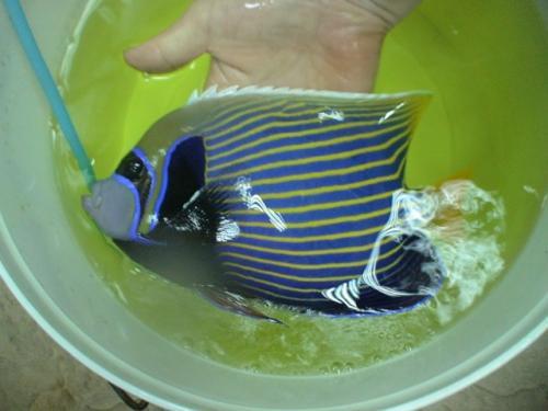 Balifishmarine10