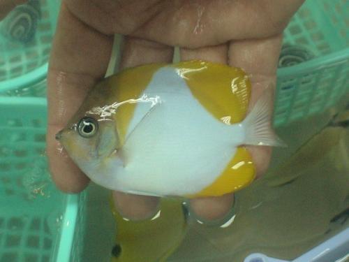 Balifishmarine12