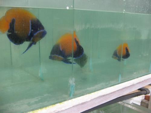 Balifishmarine15