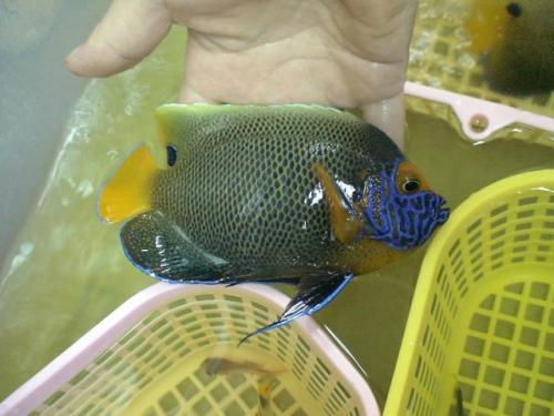 Balifishmarine7