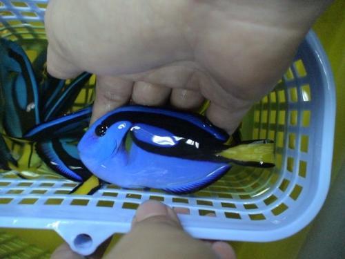 Balifishmarine9
